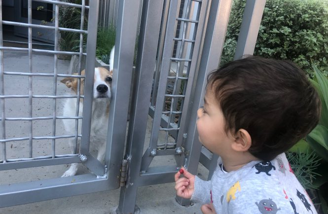 hello to doggy